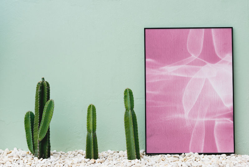 Green wall color, cacti, and pink picture